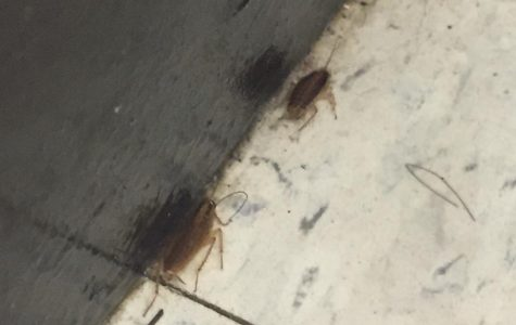 Cockroaches Make Room for Themselves