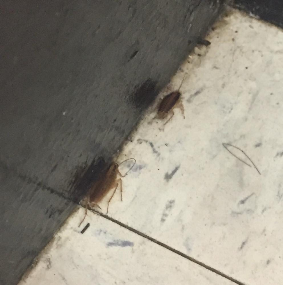 Cockroaches+Make+Room+for+Themselves